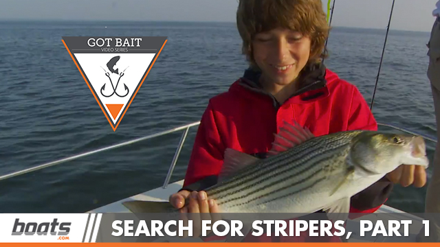Got Bait? Catching Spot, Spooking Fish, and Turncoat Anglers! thumbnail
