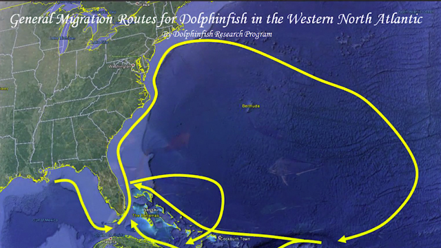 Got Bait? Mahi Madness Part I: Rigging & Dolphin Migration Patterns