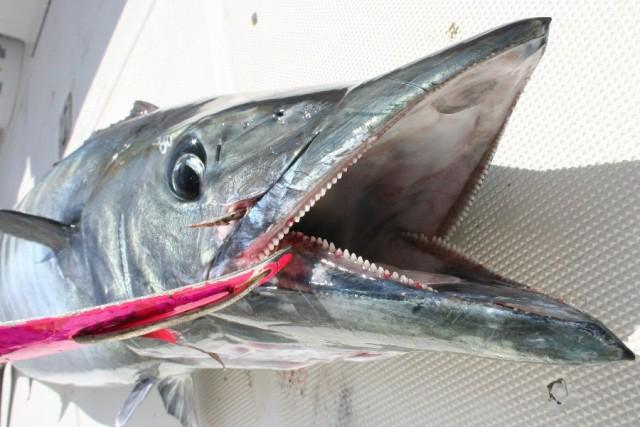 Fishing Friday: Save the Fish!!! thumbnail