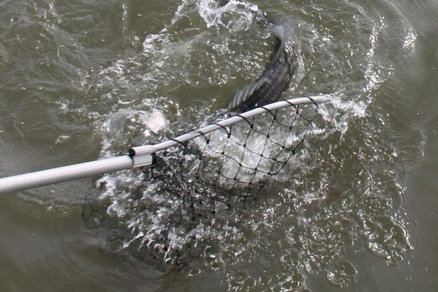 Fishing Friday: 3 Tips to Net a Fish thumbnail
