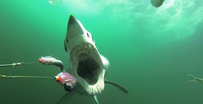 Manic Monday Videos: Shark attack!