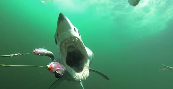 Manic Monday Videos: Shark attack!  thumbnail