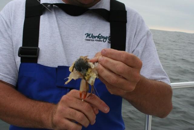 Fishing Friday: The World's Best Bait