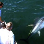 Manic Monday: Hand-Feeding Giant Bluefin Tuna