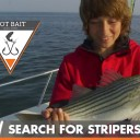 Got Bait? The Search for Stripers video fishing show