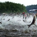 Manic Monday Videos: Asian Carp Hunt Bowfishers