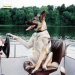5 Boat Dogs Your Kids Really Need