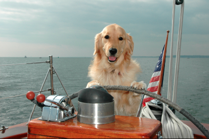 5 Boat Dogs Your Kids Really Need Boats Com