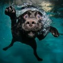 Last Minute Gift Idea: Amazing Underwater Dog Photography