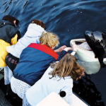 Manic Monday Video: Orca Whale Mimics Outboard