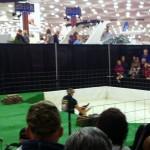 Man Wrestles 200 Pound Alligator at Baltimore Boat Show. Seriously.