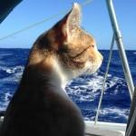 Cats on Boats: Liz Clark's Amelia