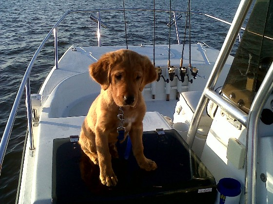 Dogs love boats just as much as people do!