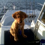 10 Tips for Taking Your Dog on a Boat