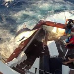 Manic Monday Videos: Marlin 1, Fishermen 0