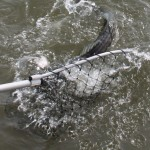 Fishing Friday: 3 Tips to Net a Fish
