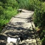 Intracoastal Waterway: Bella's rumble
