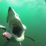 Manic Monday Videos: Shark attack!