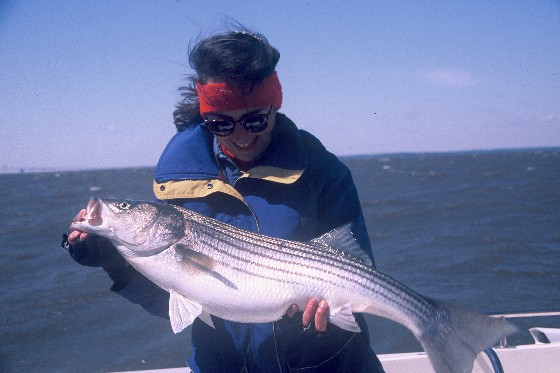 fishing for striper stripers