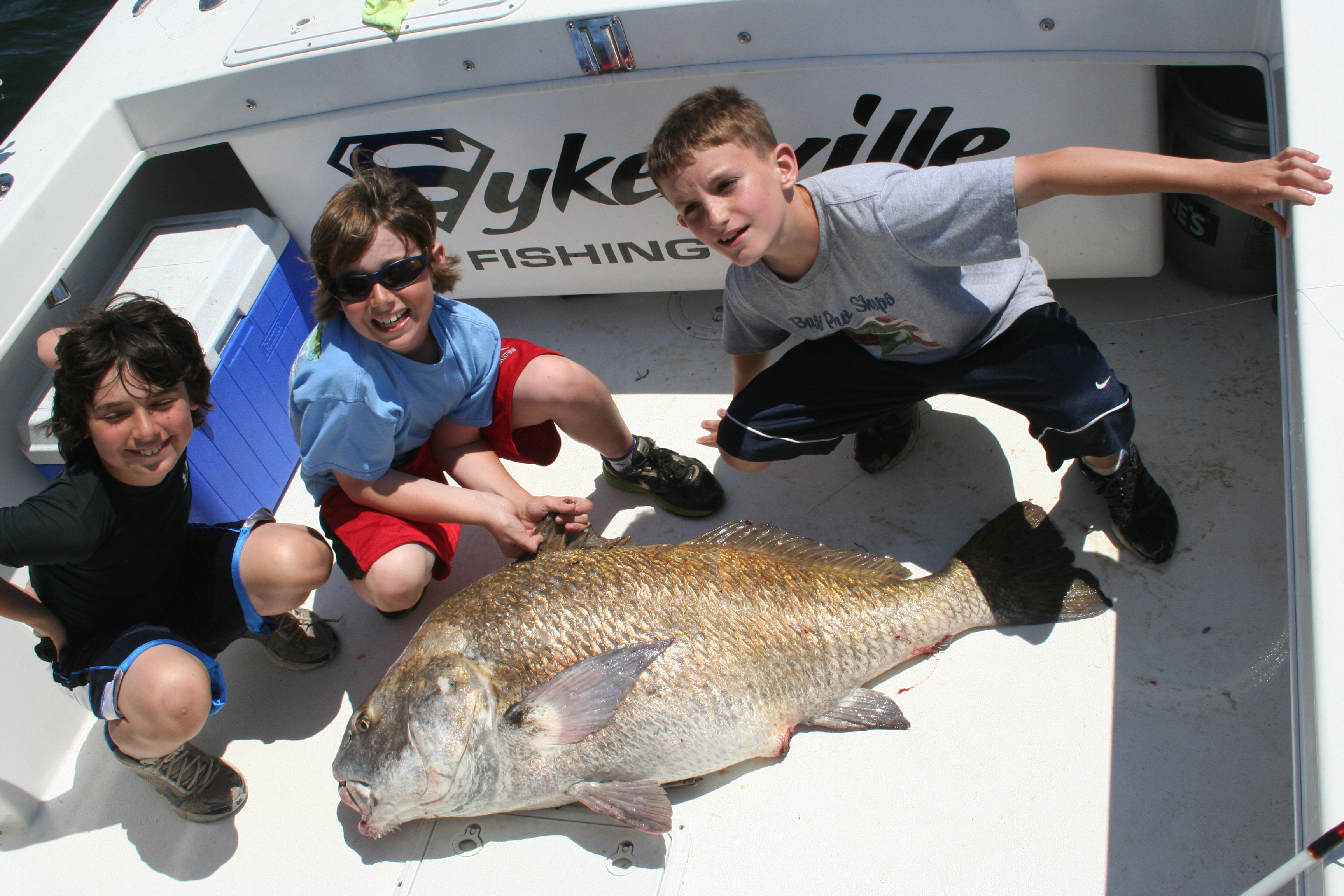 black drum fish