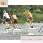 Waterbird Competition: Stay Afloat and Have Fun